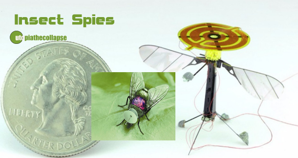 Insect Spies